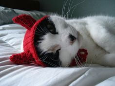 Knitted Kitty Cap with Ear Covers::this is so adorable! And kitty doesn't seem to mind at all. Of course, that's not to say All kitties would stand for this.. At Sam