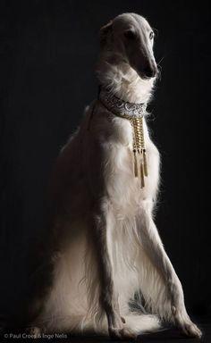 Dog Portrait by Paul Croes