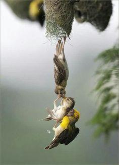 Falling or just hanging around?!