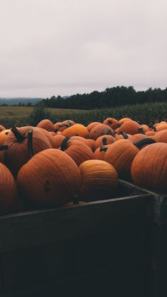 Halloween Pumpkins ★ Find more autumn & other seasonal wallpapers for your #iPhone + #Android @prettywallpaper