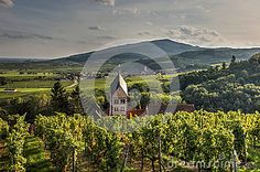 View of the church from the village of Itterswiller (Alsace, France) with vineyards in autumn.