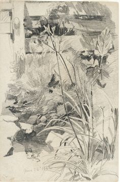 William Trost Richards Day Lilies by a Wooden Fence, 1862 graphite on tan wove paper Sheet size: 9 1/8 x 6 in. National Academy Museum, New York, Bequest of Mrs. William T. Brewster, daughter of the artist, 1952