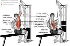 One-arm lat pull-down exercise https://www.musclesaurus.com/