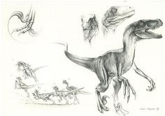 JP Velociraptor by PaleoPastori.deviantart.com on @DeviantArt
