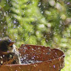 Les oiseaux du jardin : les accueillir, les reconnaître et les protéger Jolie Photo, Bird Feeders, Birds, Outdoor Decor, Nature, Lorraine, Point, Bouquets, Friends