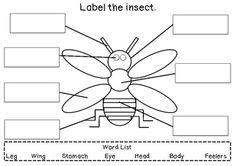 Printables Insect Body Parts Worksheet mfwk insect unit label the set worksheet may this is an early years writing activity where children are required to insect