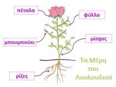 Νηπιαγωγός για πάντα....: Μελέτη Περιβάλλοντος,Γλώσσα,Τεχνολογία : Λουλούδια Science For Kids, Activities For Kids, Spring Theme, Flower Crafts, Trees To Plant, Natural, Projects To Try, Logo Design, Classroom