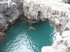 Galapagos Island turtle.