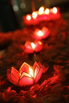love these tealight holders maybe you can find similar in other colors think they are lotus blossoms