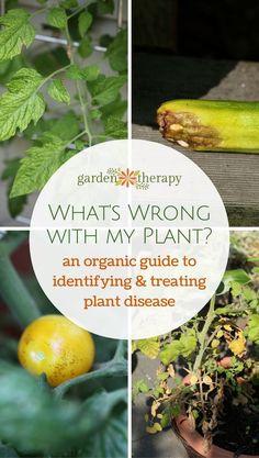CSI Horticulture: Organic Control of Plant Disease