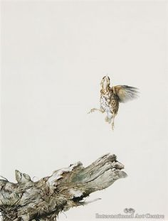 View Song thrush by Raymond Harris Ching on artnet. Browse upcoming and past auction lots by Raymond Harris Ching.