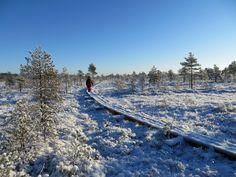 Eri vuoden aikoina - eri päivinä - eri kellonaikoina - Torrolla on aina eri tunnelma. Järjestämme opastettuja retkiä tänne!  #torronsuo #kansallispuisto #nationalpark #suoluonto #erärenki #tammela