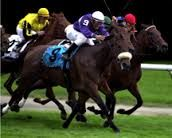 Riskaverse(1999)Dynaformer- The Bink By Seeking The Gold. 4x4 To Buckpasser, 4x5 To Nashua, 5x5 Hasty Road. 32 Starts 9 Wins 6 Seconds 4 Thirds. $2,182,429. Won 2004 & 2005 Flower Bowl Inv(G1), 2002 Queen Elizabeth II Challenge Cup(G1), 2nd 2004 Diana H(G1), Beverly D. Hcp(G1), 3rd 2001 Frizette S(G1), 2003 Beverly D. Hcp (G1).