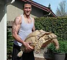 """Colin Kaepernick has a huge pet tortoise named Sammy (Picture)"" Larry Brown Sports (December 5, 2012)"