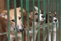 Photo about Three cute puppies locked in the cage. Image of canine, pedigree, face - 21446572 Vet Clinics, Animal Rescue Site, Puppy Mills, Animal Cruelty, Rescue Dogs, Cute Puppies, Pet Adoption, Dog Cat, Corgi