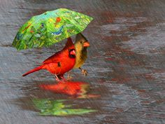 Cute Cardinals.  (There's some photoshop happening here.)