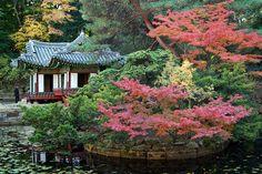 Buyongji Pond, Secret Garden, Changdeokgung Palace Autumn Leaves