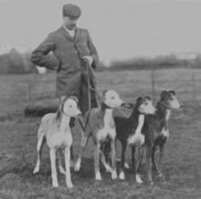 Farndon Ferry (Waterloo Cup winner 1902), Fabulous Fortune, Fearless Footsteps(Waterloo Cup winner 1900 1901) and Father Flint. Turn of the century coursing hounds.