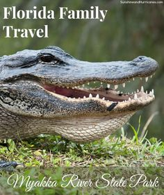 Looking for something fun to do with your family that's not another day at a crowded theme park or Disney World? Come enjoy a day of fun on Florida's West Coast biking, kayaking, hiking, boating and more! See the REAL Florida wildlife! Florida Family Travel Myakka River State Park