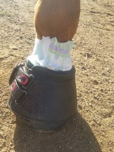 Horse Clipping, Horse Fencing, Horse Anatomy, Horse Grooming, All About Horses, Horse Tips, Horse Training, Horse Care, Equestrian Style