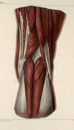 inside of knee