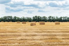 Straw Bales, Brochure Design Inspiration, Grains, Texture, Surface Finish, Korn