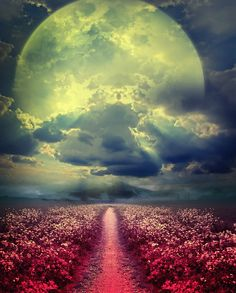 I love this picture. I love how the full moon seems to sit on top of the clouds. The full moon also shines down upon the flowers below. Beautiful Moon, Beautiful World, Beautiful Places, Beautiful Moments, Moon Pictures, Pretty Pictures, Shoot The Moon, Foto Art, To Infinity And Beyond