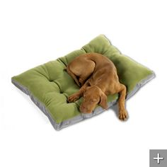 Dog bed in XXL!  grandinroad.com