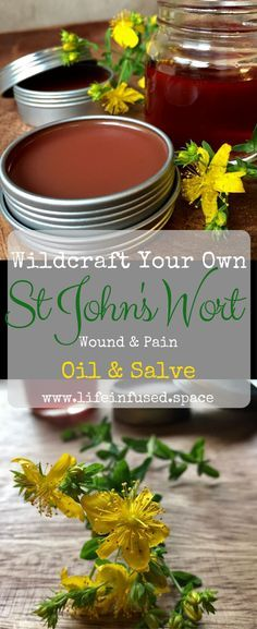 Wildcraft your own St. John's Wort wound and pain oil & salve using fresh backyard plants