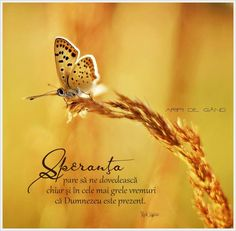 Bless The Lord, Words Of Encouragement, True Words, Wallpaper Quotes, Good Morning, Blessed, God, Sweet, Buen Dia