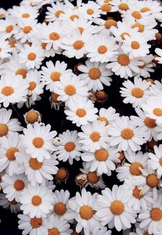 daisies are my favorite flower :) You HAVE to smile when you see them :)