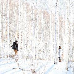 【torofilm24】さんのInstagramをピンしています。 《#birch #forest #lover #冬 #白樺 #森 #きれいな #恋人》