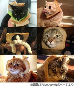 These poor kitties are obviously in-bread