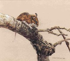 Robert Bateman White-footed Mouse in Aspen
