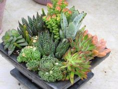 Vida Suculenta: Arranjos de Mesa com Suculentas - Succulent Centerpieces                                                                                                                                                     Mais