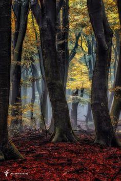 ~~A Forest Torch | I long to roam the Speulder Forest, Netherlands | by Lars van de Goor~~
