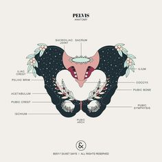 Self discover and educate yourself through this beautifully designed pelvis anatomy illustration. Pelvis Anatomy, Lung Anatomy, Heart Anatomy, Brain Anatomy, Human Anatomy, Human Figure Drawing, Figure Drawing Reference, Anatomy Reference, Learn Drawing