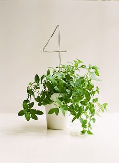 Using Potted Plants In Your Wedding Decor -