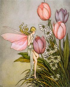 fairy tulips vintage art