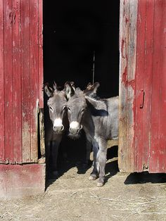 """Donkeys"" by Susy Rushing"