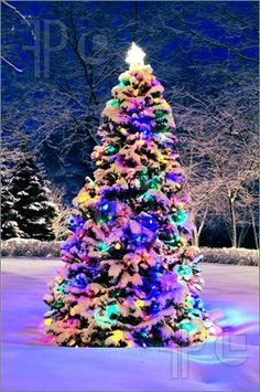 Image of Decorated christmas tree outside with lights covered with snow