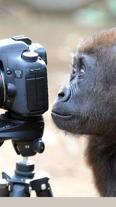 Animal Photography, Amazing Photography, Nature Photography, Tropical Animals, Animal Jokes, Creatures, Canvas, Eos, Tela