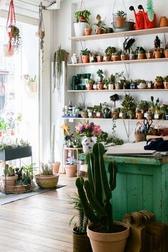 New Plant Shop in Paris: Le Cactus Club
