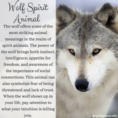 Wolf Spirit Animal The wolf offers some of the most striking animal meanings in the realm of spirit animals. The power of the wolf brings forth instinct, intelligence, appetite for freedom, and awareness Spirit Animal Totem, Wolf Totem, Animal Spirit Guides, Animal Totems, Spirit Animal Tattoo, Animal Totem Meanings, Animal Symbolism, Wolf Symbolism, Wolves Of Wall Street