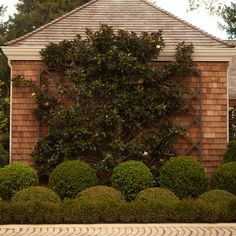 Espalier Magnolia Home Design Ideas, Pictures, Remodel and Decor