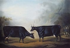 19th Century Dutch Cow Paintings | Paul Stallan