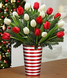 20 Christmas Tulips with Fresh Douglas Fir