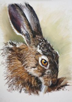 Award winning artist Catherine E Inglis SWA works predominantly in soft pastels and covers a wide variety of subject matter, but is well known for her wildlife, animal portraiture and commissioned portraits. Catherine is an active member of the Society of Women Artists and has regularly exhibited in the Mall Galleries and all across the UK in several joint and solo exhibitions. Catherine has been a tutor and demonstrator of pastels for several years. Below we share her thoughts on Sennelier S... Pastel Paintings, Animal Paintings, Jackson's Art, Soft Pastels, Telling Stories, Art Blog, Bugs, Parks, Wildlife