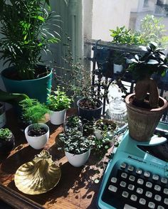 Urban Jungle Bloggers sur Instagram : Weekend plans: sunbathing & writing! What are yours? :@loulouchampagne #urbanjunglebloggers