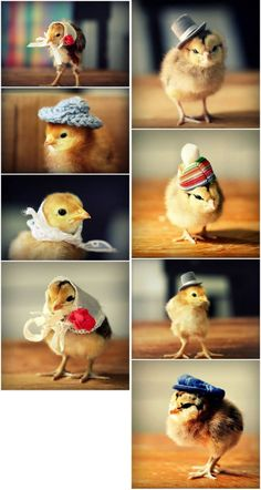via http://themetapicture.com/chicks-in-hats/